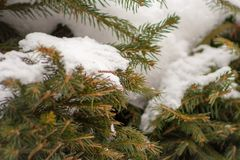 Close up of snow Stock Images