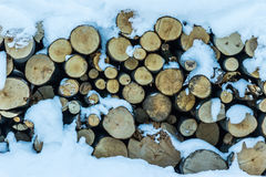 Close up of snow covered trees and logs Royalty Free Stock Photography