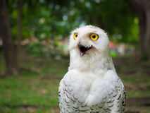 Close up on snow owl in the park Stock Photography