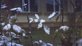 Close-up of Snow on Plants during Winter stock photos
