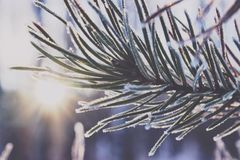 Close-up of Snow on Tree during Winter Royalty Free Stock Photo