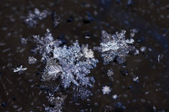 Close up of snowflakes Royalty Free Stock Photo