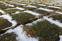 Close up snowy sidewalk with green fern Stock Photo
