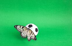 Close-up soccer ball with butterfly in a grass field. Butterfly is the Idea of Leuconoy.