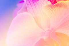 Close up soft orchid flower in pastel filtered as background (oi. L paint effect Stock Photography