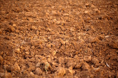Close up Soil Royalty Free Stock Image