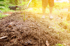 close up soil fertilizer Organic farming nature royalty free stock images
