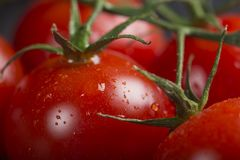 Close up of cherry tomatoes with water. Close up of some bunch of cherry tomatoes with water drops Stock Images