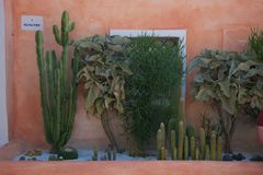 Close up of some fat plants. In a flowerbed and behind  it a salmon colored  wall in Porto Cervo Royalty Free Stock Images