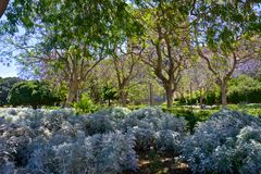 Close up of some plants and trees. In public garden of Cagliari Royalty Free Stock Photo