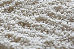 Close up on some raw ripe rice. Close up on raw ripe rice royalty free stock images