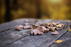 Wet autumn leaves on table. Close up of some wet autumn leaves on a dark old wooden table Royalty Free Stock Images