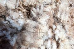 Close up of some wool clip stock image