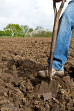Close up of someone digging. Close up of someone pushing a spade into soil with his foot in the process of digging Stock Photo