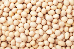 Close up of soy beans - horizontal Stock Photo
