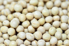 Close-up of Soybean. Stock Photos