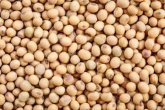Close up soybean Royalty Free Stock Photo