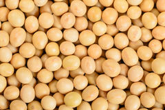 Close up of soybean Royalty Free Stock Photography