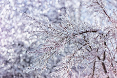 Close Up of Sparkling Ice Covered Branches Stock Image