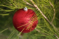 Close up of sparkly red round Christmas ornament on tree Royalty Free Stock Images