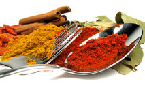 Close-up spices Stock Image