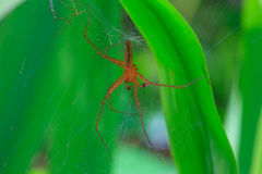 Close up spider in forest Stock Images