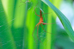 Close up spider in forest Stock Photo