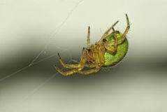 Close up spider 2 Stock Images