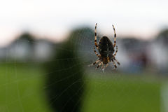 Close up of spider and its web. Outside a window Royalty Free Stock Images
