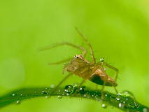 Close up spider with nice green background Royalty Free Stock Photos