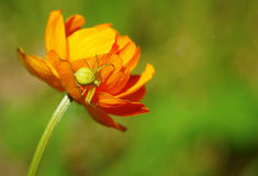 Close up of a spider sitting on the bright beautiful flower Stock Photos
