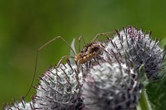 Close up of spider on thistle stock image