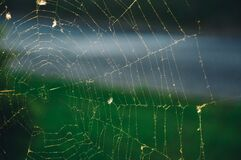 Close up of spider web Stock Images