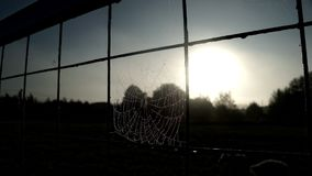 Close up spider web with dew drops on grid fence on sun rays background. stock video footage