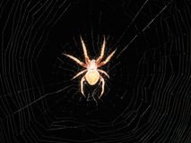 Close up spider on web. Large spider close up in center of web Royalty Free Stock Photos