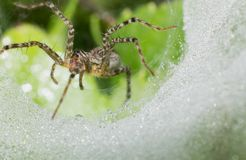 Close-up spider on web, macro insect in wild royalty free stock image
