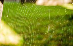 Close-up of spider web on plants Stock Photos