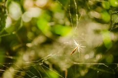 Close-up of spider web on plants Stock Image