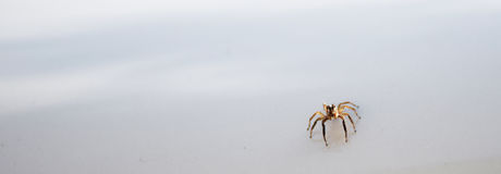 Close up spider on white background. Stock Photos