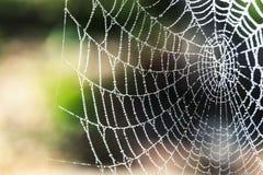 Close up of spiderweb