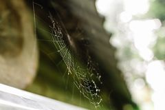 Close up of a spiderweb with drops of dew stock photos