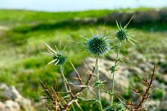 Close-up of spike plant in meadow. Close-up of spike plant in the meadow stock photos