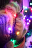 Close up of spiky potted cacti decorated with colored fairy ligh. Colourful Christmas lights on a potted cactus royalty free stock photos