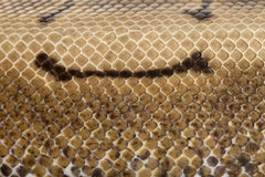 Close-up of Spinner Python, Royal python skin Stock Images