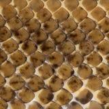 Close-up of Spinner Python, Royal python skin Stock Photos