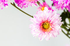 Close up spray flower, on white background. Stock Image