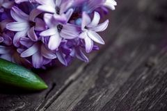 Close up of spring blue hyacinth flowers and red heart on wooden Stock Photo