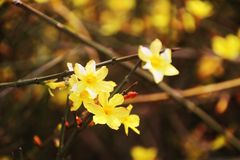 Spring flowers in the sunshine royalty free stock photo