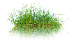 Close up spring green thick grass Royalty Free Stock Photography