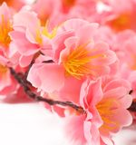 Close up of spring pink flowers. Royalty Free Stock Photography